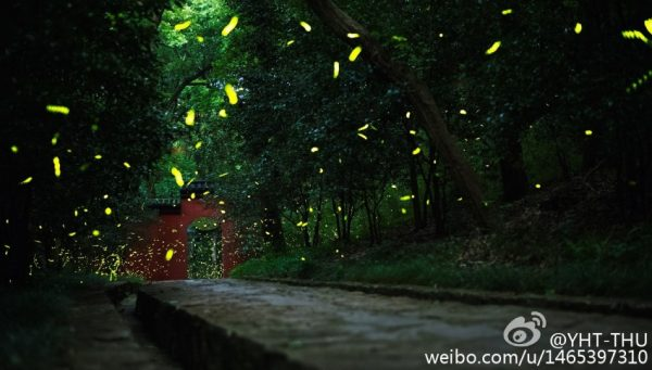 Fleeting fireflies at the temple gate. (Image: Weibo.com)