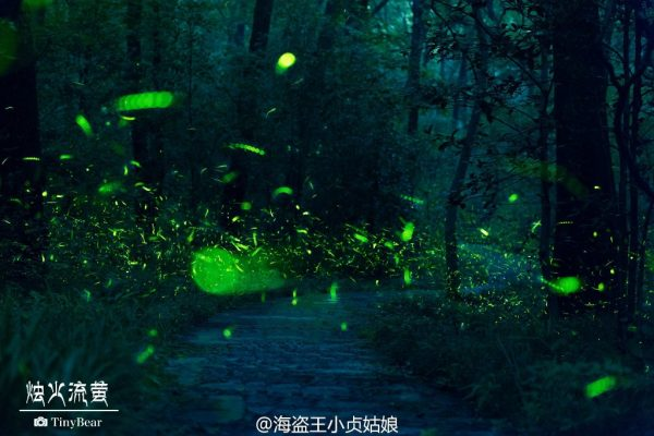 Firefly lit up the mountain path. (Image: Weibo.com)