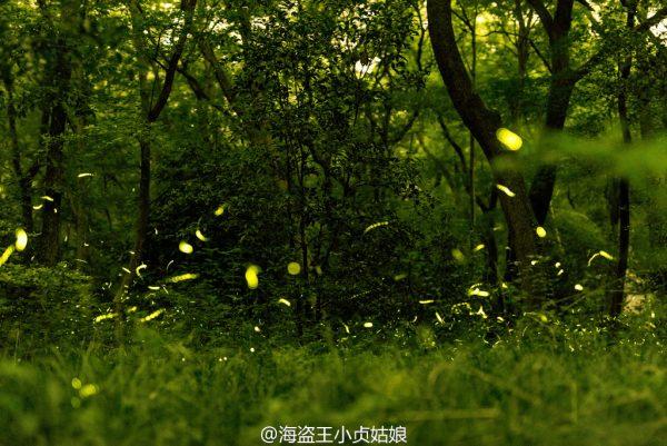 Firefly-Nanjing-Linggu-Temple-7
