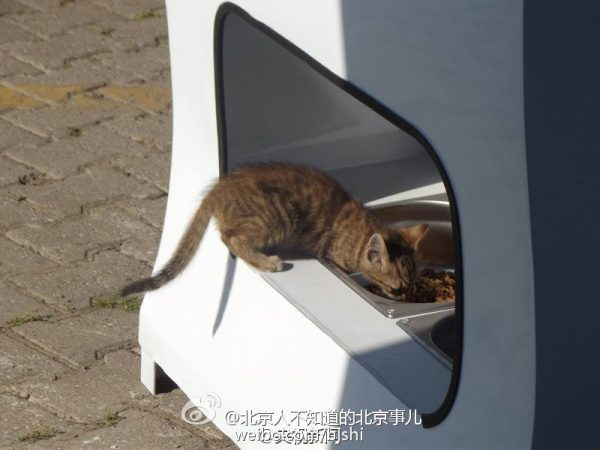 A cat was having the food. (Image: Weibo.com)