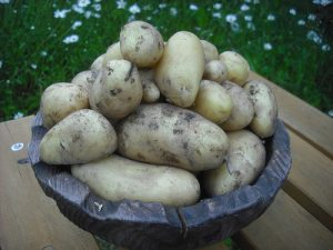 Potatoes are starches, this means they quickly turn into simple sugars (glucose) (Image:Steve Worsethandetroit/flickr)