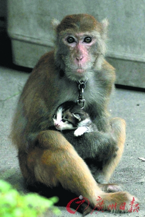 Monkey and the kitten. (Image: