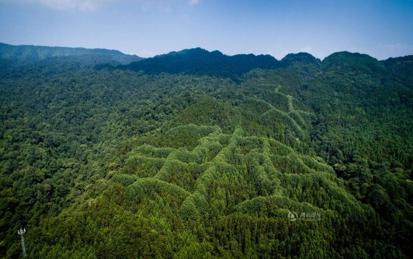 mysterious-pattern-forest-China-2