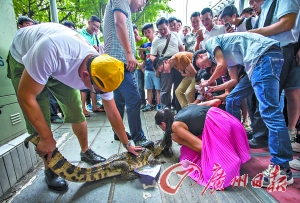 A female employee from the company kissed the crocodile. (Image: Guangzhou Daily Newspaper)