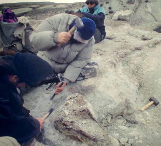 Sarmientosaurus excavation. (Image: Courtesy of Ruben Martinez)