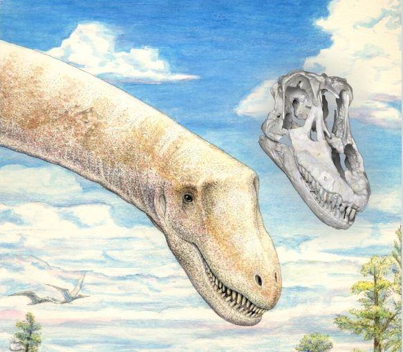 Sarmientosaurus life reconstruction & skull. (Image: Courtesy of )