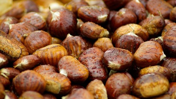 Active compounds in horse chestnut seeds appear to inhibit enzymes that can damage capillary walls, and this also helps strengthen veins. (Image: pixabay / CC0 1.0)