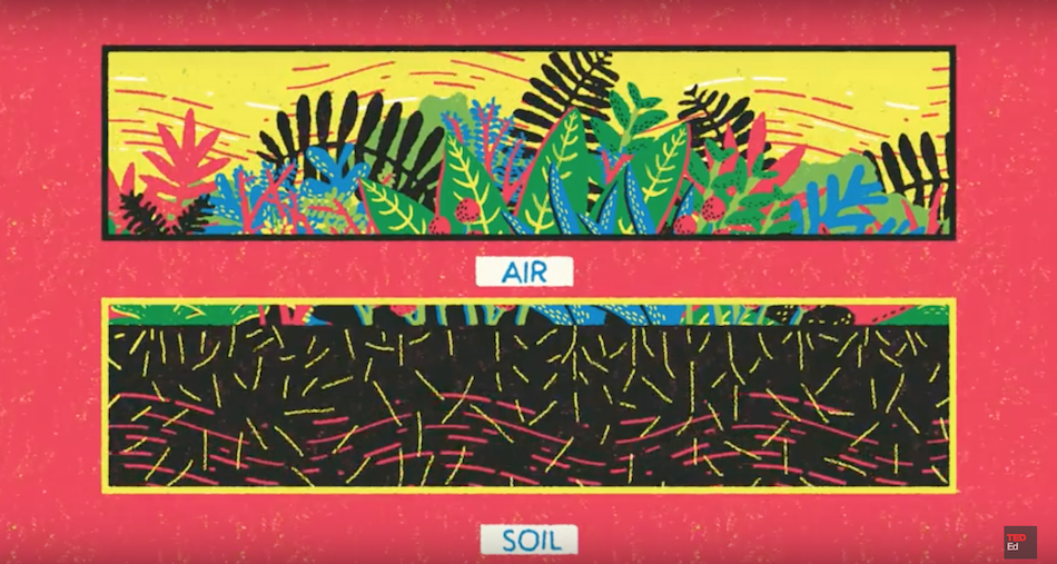 Plants don't have to rely solely on those airborne broadcasts, signals can travel below the soils surface too. (Image: Yukai Du, via TED-Ed YouTube/Screenshot)