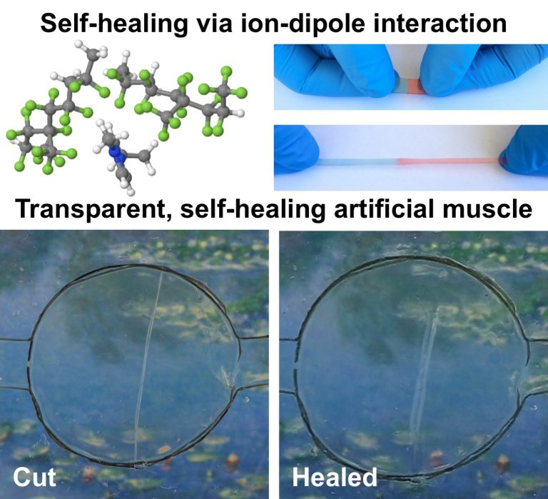 Illustration showing new self-healing material. (Image: via University of California)