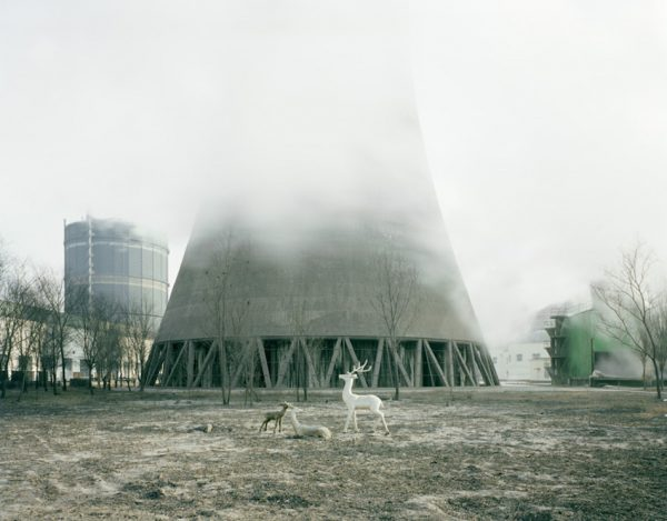 White deer under a cooling tower, Inner Mongolia. (Image: Zhang Kechun)