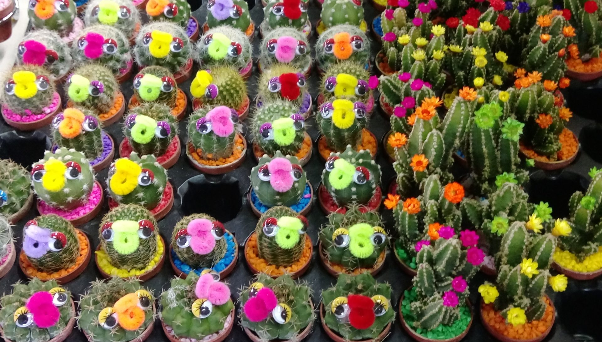 A variety of flower plants are sold at the shops in Yangmingshan's Zhuzihu area. (Billy Shyu/ Vision Times)