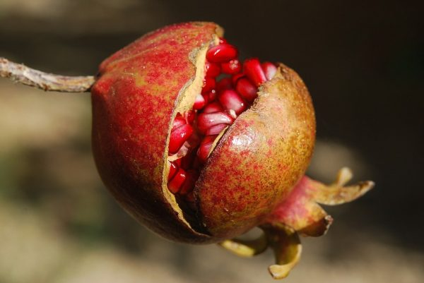 Anyone who tastes the food of Pluto must remain in the Underworld. Persephone was tricked by him into eating pomegranate seeds. (Image: Pixabay / CC0)