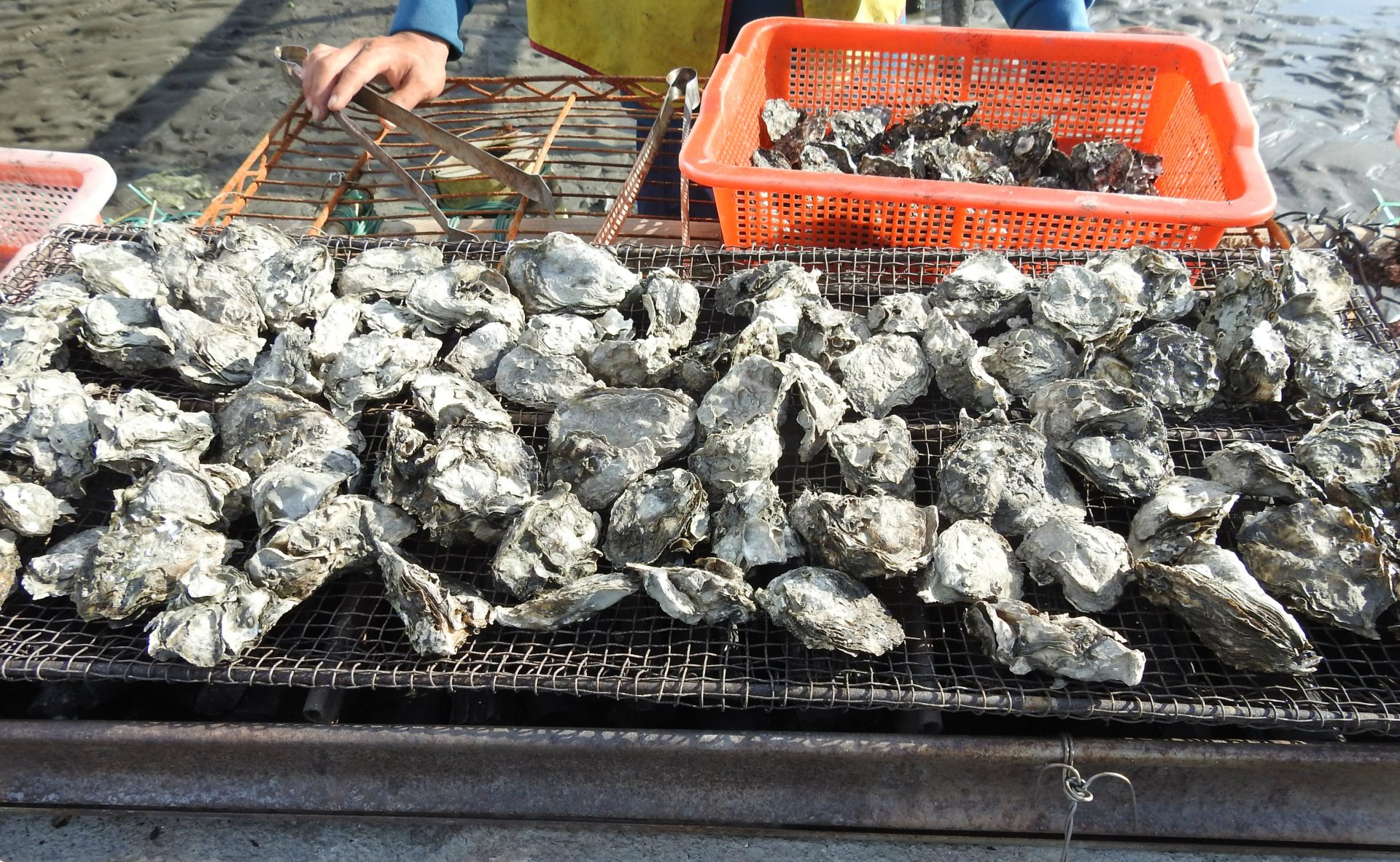 Fresh oysters are grilled on a makeshift facility at the lagoon in Wanggong. (Image: Billy Shyu/ Vision Times)