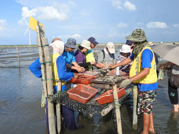 Patrons can eat grilled or raw oysters as much as possible during the exploration of the intertidal zone in Wanggong. (Image: Billy Shyu/ Vision Times)