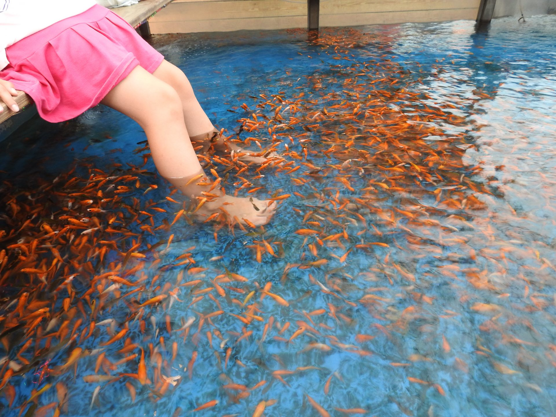 It's a great experience to soak feet in distinctive fish ponds to let small golden fishes to suck off dead skin from our feet. (Image: Billy Shyu/ Vision Times)