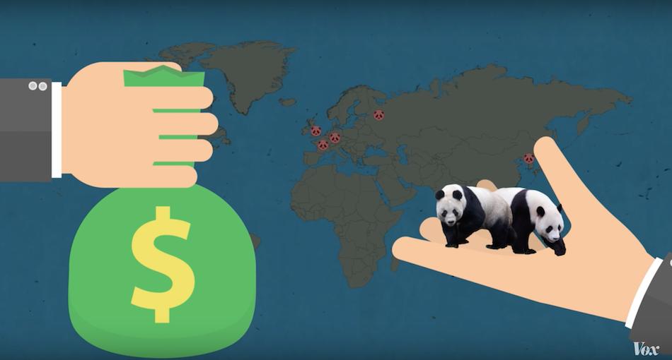 China's makes 1 million US dollars per panda from it's loan of pandas to zoos around the world. (Image via Vox YouTube/Screenshot)