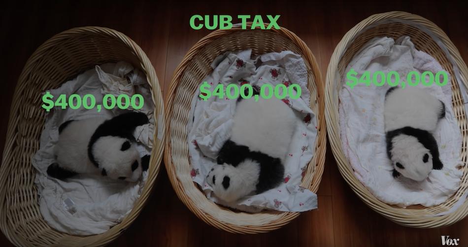 Cub tax is charged at $400,000 US dollars per cub born. (Image via Vox YouTube/Screenshot)