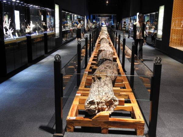 The petrified wood (36 meters long) is one of the longest collections of its kind in the world. (Image: Billy Shyu/ Vision Times)