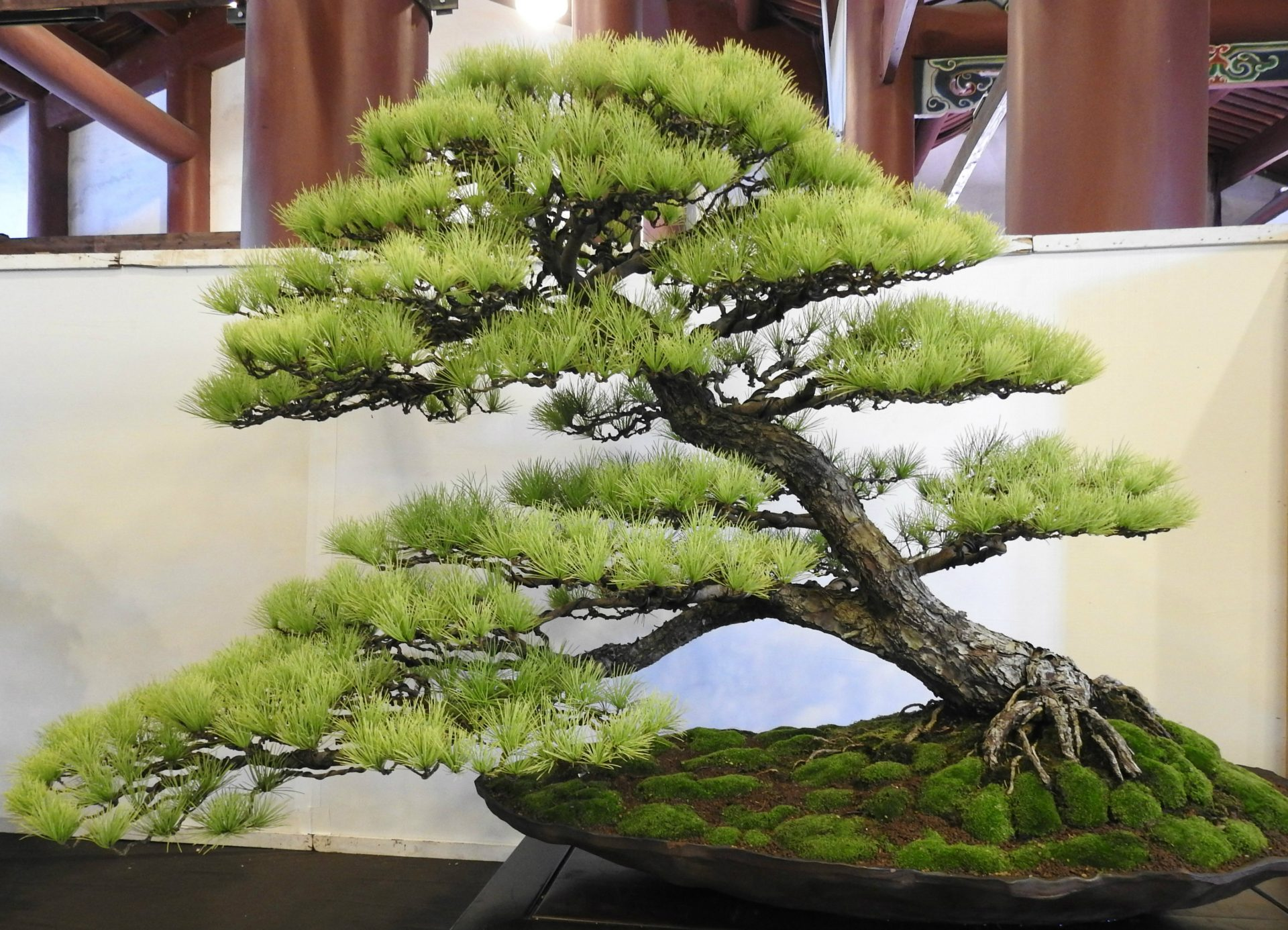 One of the gold award-winning bonsai works at the 2017 Han Feng Bonsai Exposition (Image: Billy Shyu/ Vision Times)