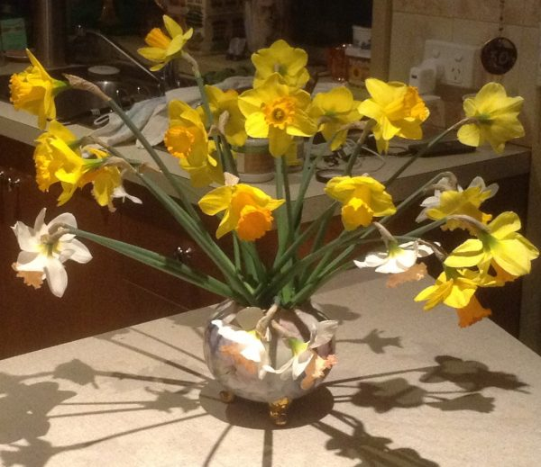 Picture of cut daffodil flowers in a vase by Trisha Haddock