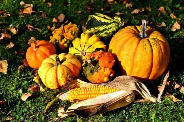 pumpkins-2780086_960_720