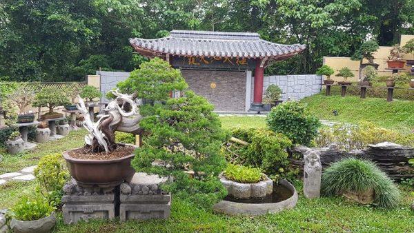 The garden of Amy Liang Bonsai Museum in Taipei (Image: Courtesy of Jenny Zhang)