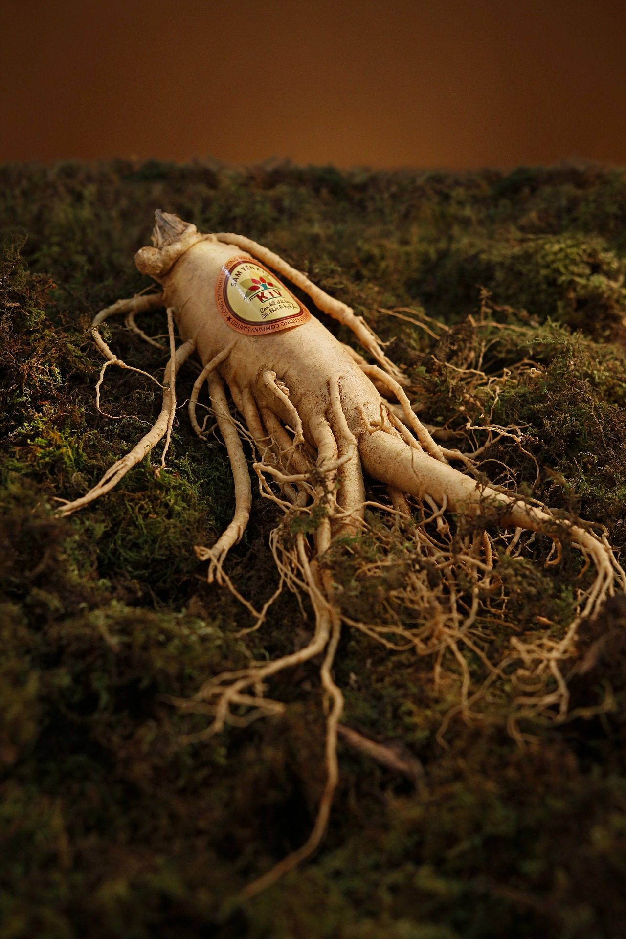 Wealthy Chinese will pay up to $200,000 for the vitality-enhancing properties of a premium grade ginseng root. (Image: pixabay / CC0 1.0)