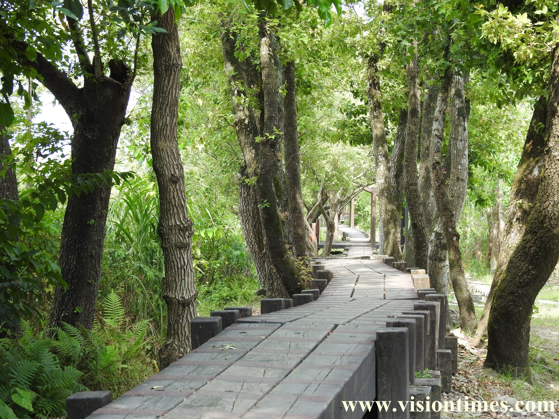 The wooden trail along the log storage pool (Image: Billy Shyu / Vision Times)