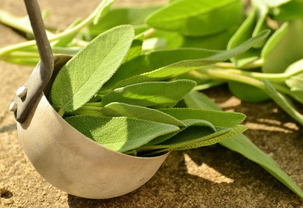 Sage has been cultivated in Germany, France, England and much of Europe for many centuries for both culinary and medicinal use. (Image: pixabay / CC0 1.0)