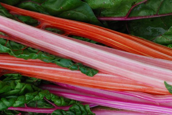 Asian medicinal rhubarb has long been known to possess health benefits and has been used in Chinese medicine for thousands of years. (Image: pixabay / CC0 1.0)