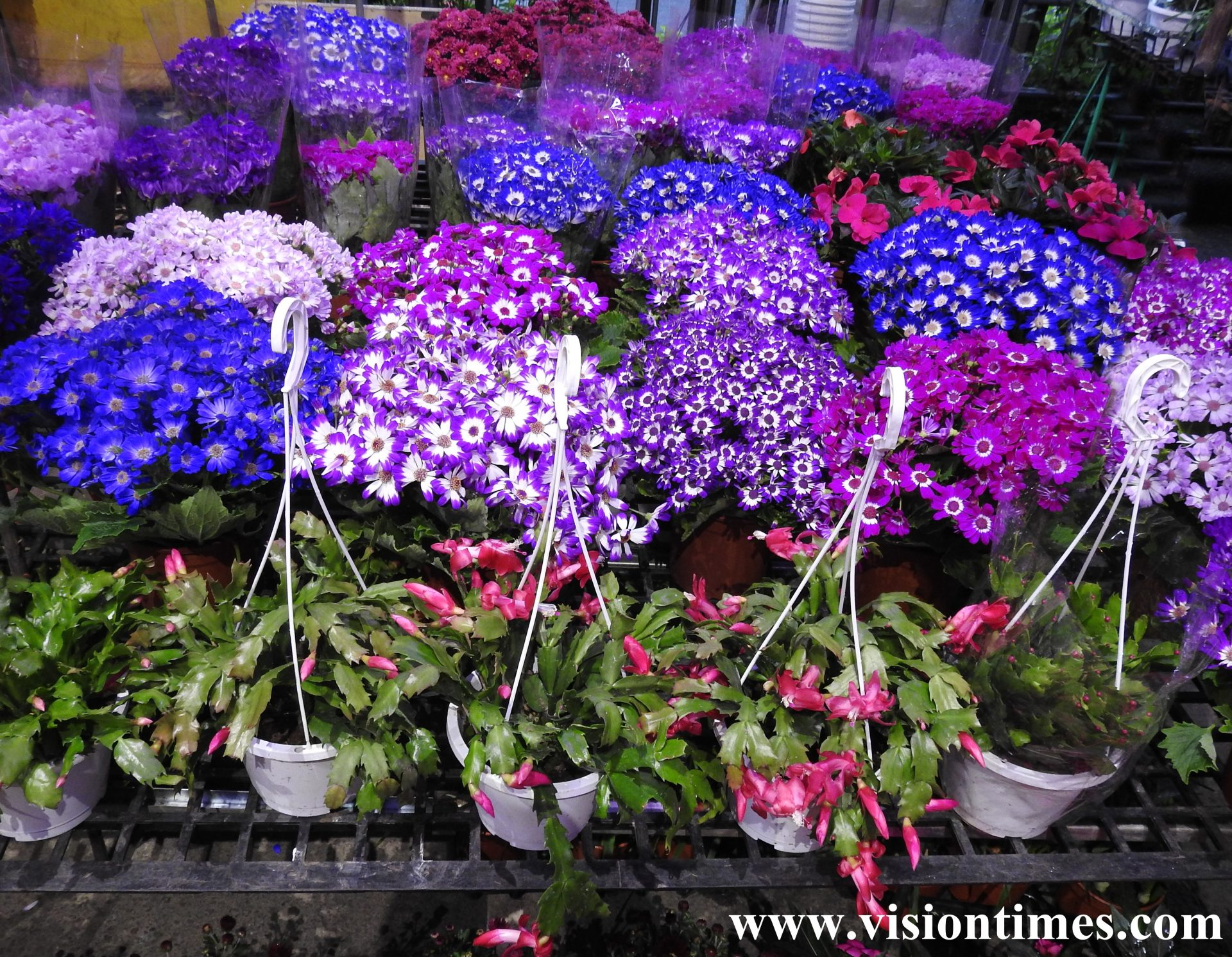 Jianguo Holiday Flower Market is vibrant with a massive variety of beautiful flowers. (Image: Billy Shyu / Vision Times)