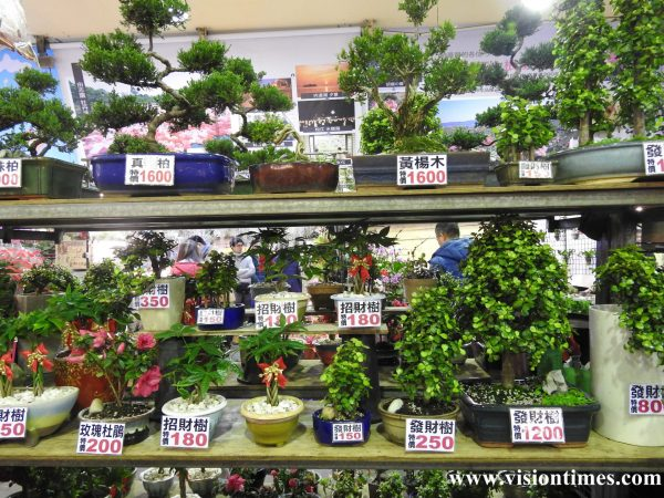 There are many bonsai trees at Jianguo Holiday Flower Market for visitors to choose from. (Image: Billy Shyu / Vision Times)
