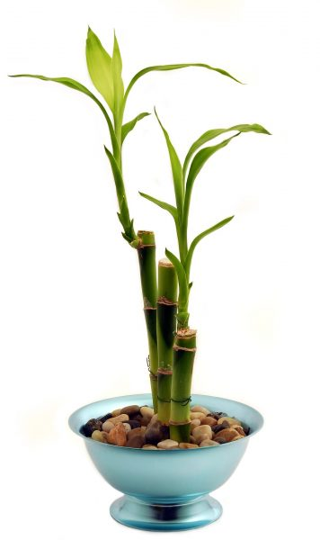Bamboo encourages prosperous business (Image via pixabay / CC0 1.0)