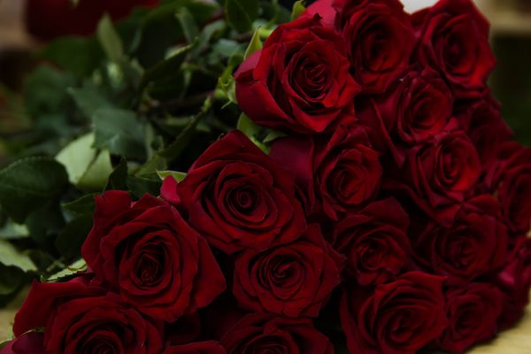 Gorgeous red roses with long stems are the roses that usually are given by gentleman, to his true love. (Image: pixabay / CC0 1.0)