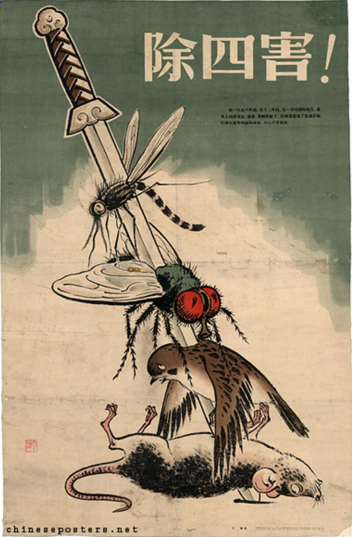 The campaign was introduced as a hygiene campaign in an attempt to eradicate the pests that were responsible for the transmission of pestilence and disease. Mao reached the conclusion that several pests needed to be exterminated — namely mosquitoes, flies, rats, and sparrows specifically the Eurasian tree sparrow – which ate grain seed and fruit. (Image: via chineseposters.net / CC0 1.0)