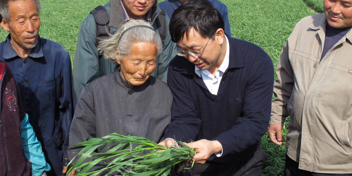 A massive, nation-wide effort to improve yields while reducing fertilizer use reached more than 20 million smallholder farmers across China. Penn Vet's Zhengxia Dou partnered in the effort, which was led by Fusuo Zhang of China Agricultural University (center, holding plant). (Provided by: University of Pennsylvania)