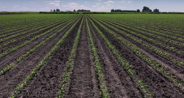 Adding fast-reacting silicate rocks to croplands could capture CO2 and give increased protection from pests and diseases while restoring soil structure and fertility. (Image: YouTube/Screenshot)