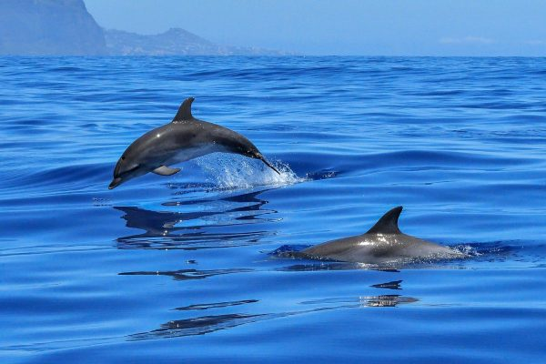 Port Stephens is also known as the dolphin capital of Australia. (Image: pixabay / CC0 1.0)