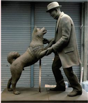 Hachiko also has a statue, placed in front of Shibuya train station, in honor of his loyalty and love towards his father. (Image: Bugsy via wikimedia CC BY-SA 4.0)