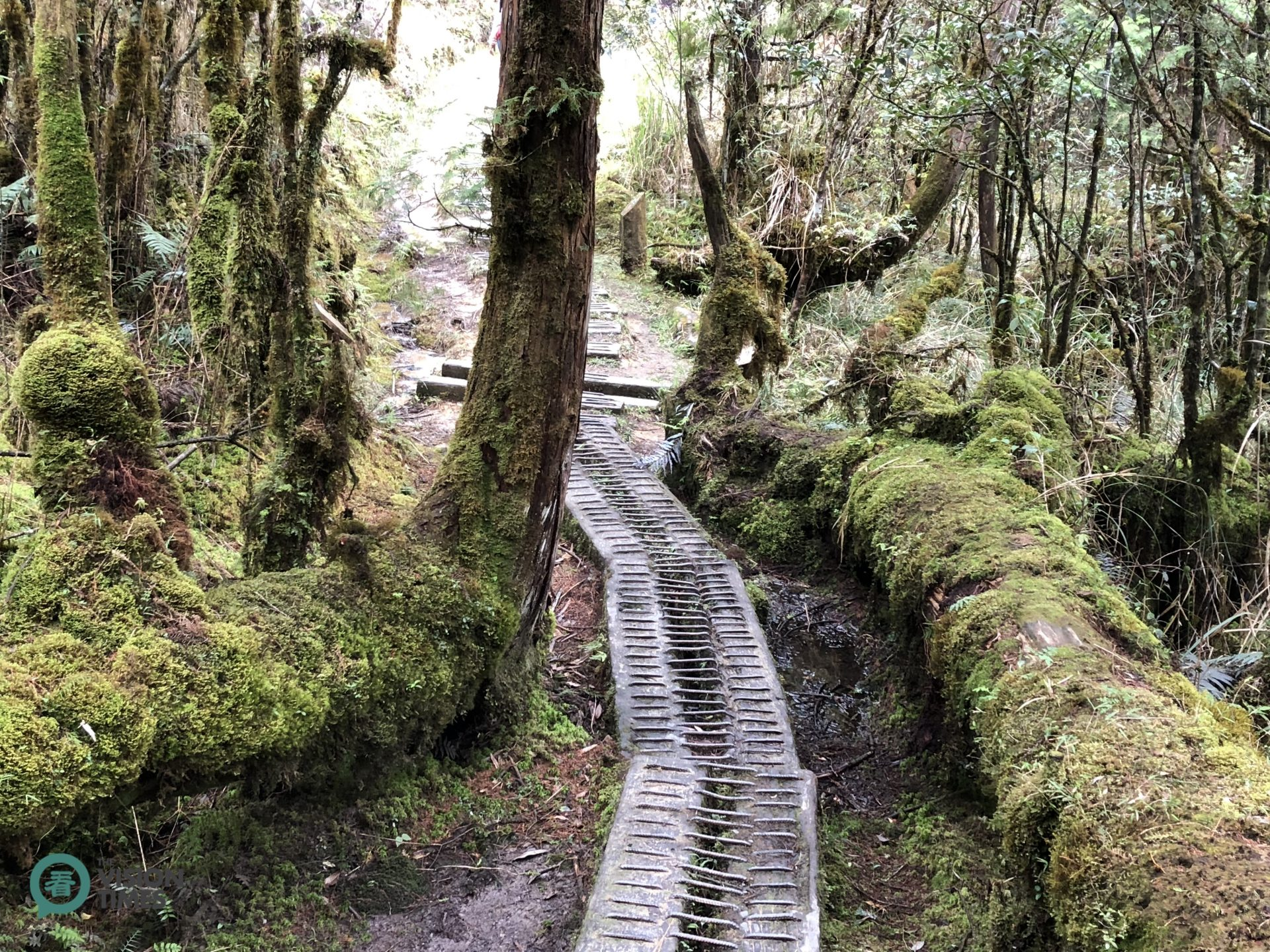 The Cueifong Lake Circular Trail is 3.95 km long, and it takes about 2.5 hours for a round trip. (Image: Billy Shyu / Vision Times)