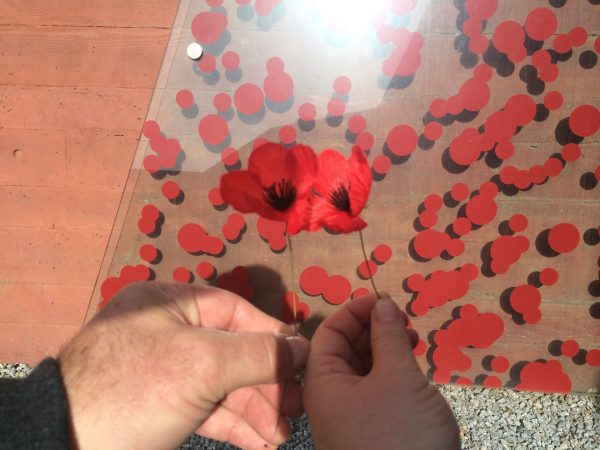 Photo by Trisha Haddock. Red Poppy shows rembrance of those who served in World War 1 and 2.
