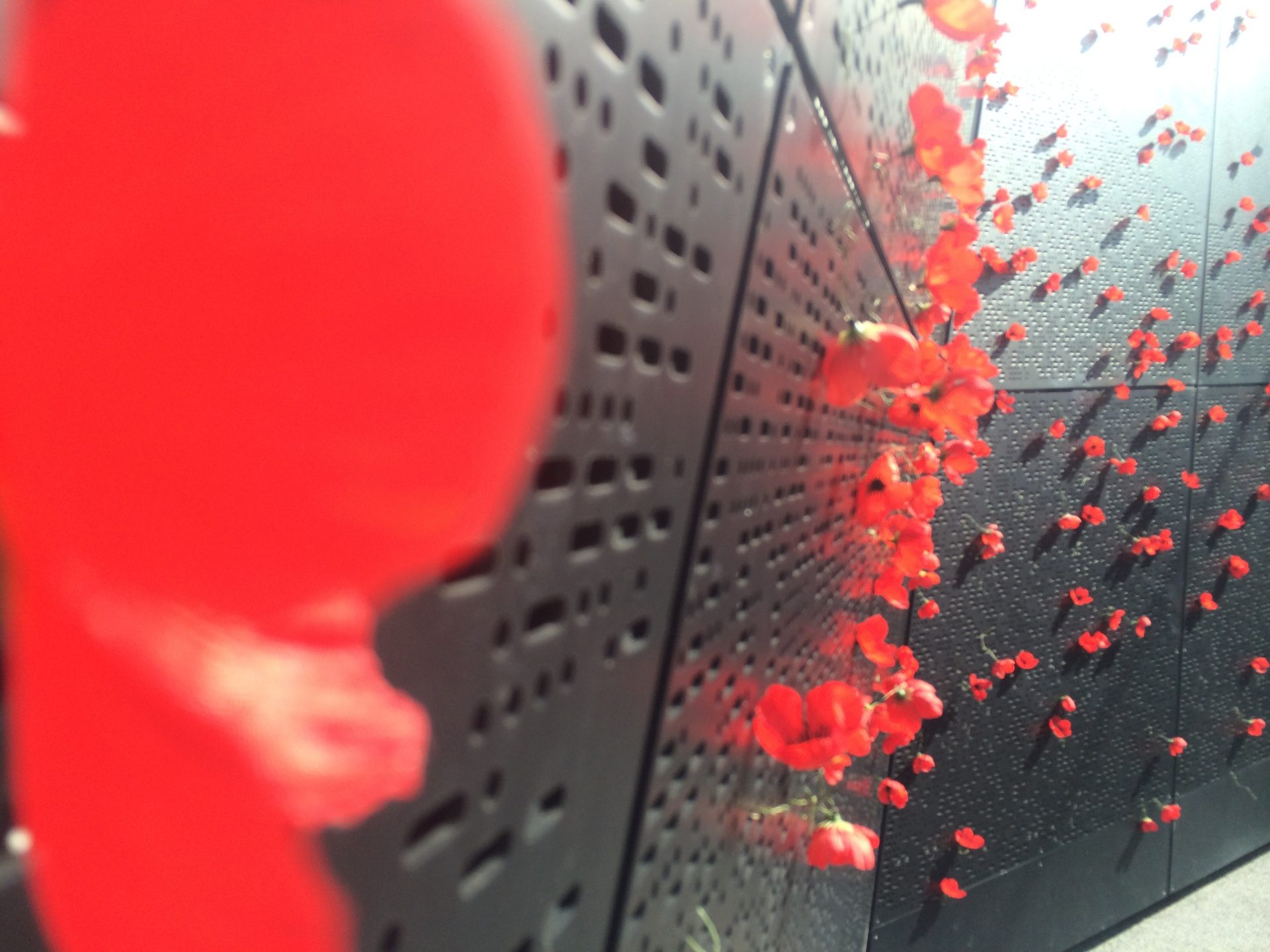 Photo by Trisha Haddock. Poppies in the Shrine of Remembrance.