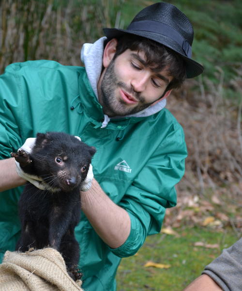 """One of Maximilian Stammnitz's best memories at Cambridge has been his encounter with Tasmanian devils on a field trip to Tasmania in 2016. """"There is nothing more exciting than examining actual devils in the wild – they are truly majestic animals!"""" he says. (Image provided by University of Cambridge)"""
