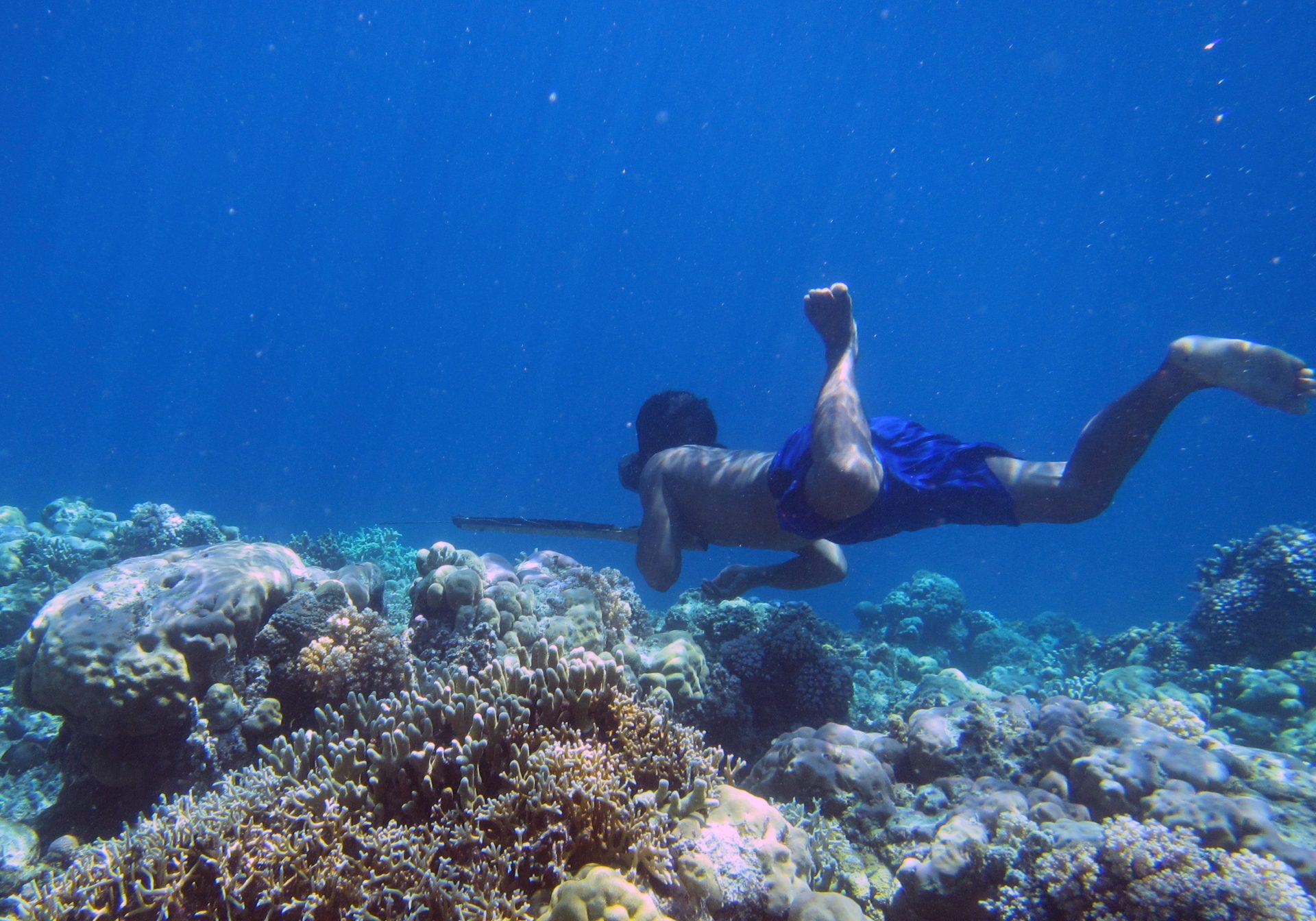 A Bajau diver hunts fish underwater using a traditional spear. (Photo by Melissa Ilardo)