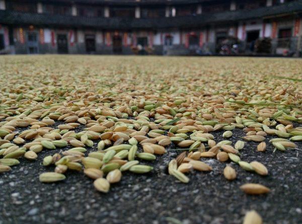 Grains nourish the body. (image via pixabay / CC0 1.0)