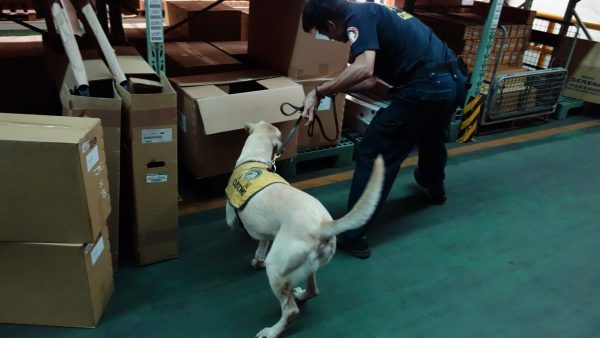 Bernie is sniffing for drugs at a warehouse in Keelung City. (Image: Keelung Customs)