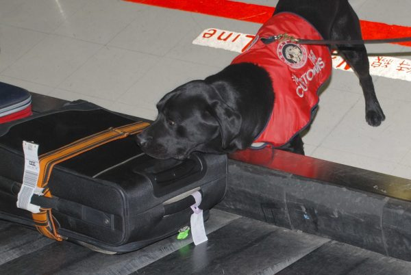 Taiwan Customs' canine enforcement operation at Taoyuan International Airport. (Image: Customs Administration)
