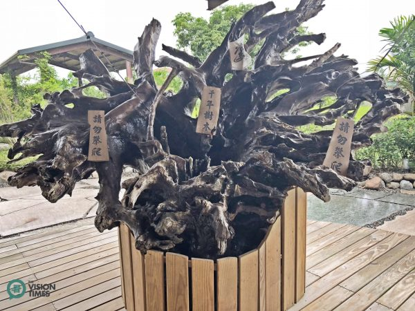 A priceless thousand-year-old Taiwan cypress root carving is displayed in front of the guesthouse. (Image: Billy Shyu / Vision Times)