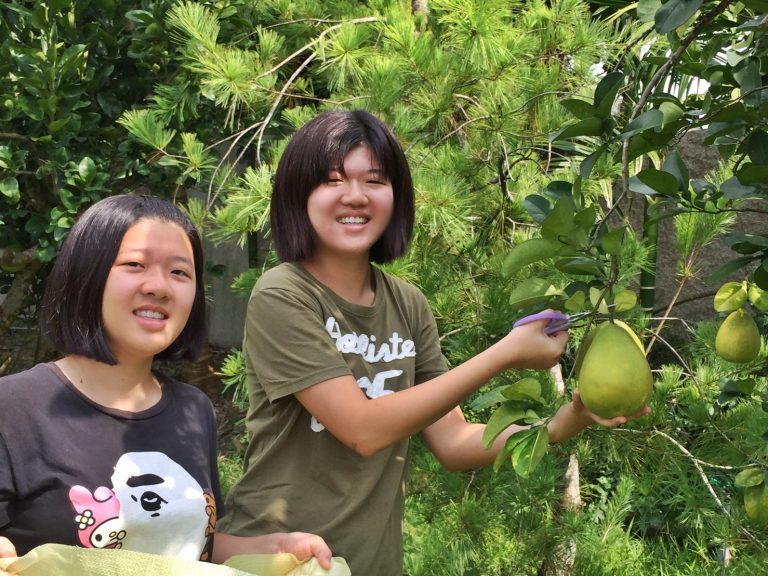 Two visitors are plucking grapefruit at the Happy Guesthouse when the grapefruit are ripe in the run-up to the Mid-Autumn Festival in September. (Image: [Provided by Happy Guesthouse)