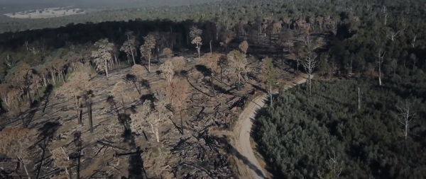 The logged forests will be more exposed and unable to protect fragile species that thrive under the canopies of the tall ancient trees. Animals are stressed and forced to move while rare plants will die. (Image: Screen Shot/ Youtube)
